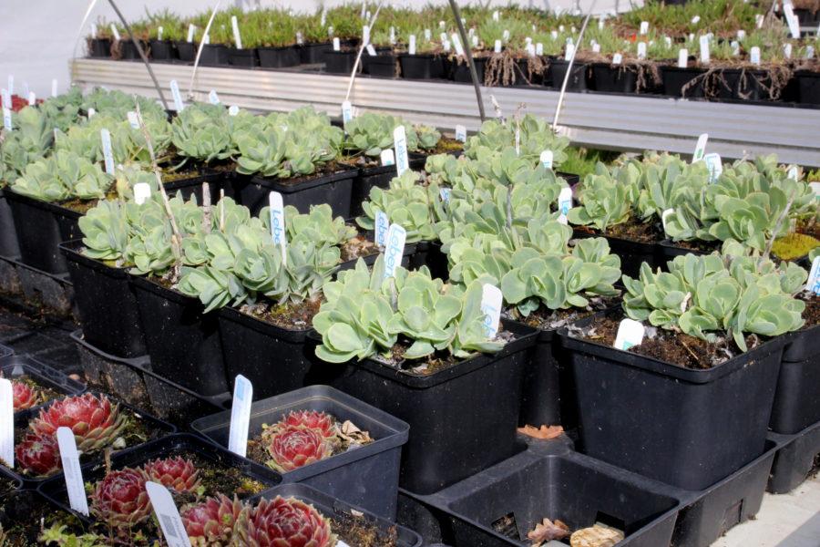 Bestellen und abholen: LebensGrün startet Pflanzenverkauf in Holtensen